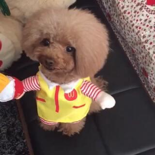 #宠物#这个麦当劳小女孩是个小吃货????#精选##宠物界吃货#