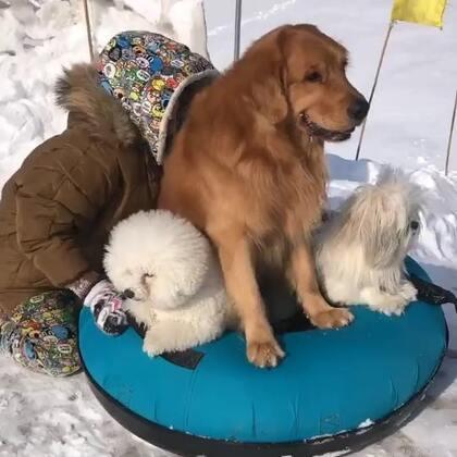 #宠物##搞笑#狗狗们很喜欢玩,就是轮胎的尾巴😂😂😂