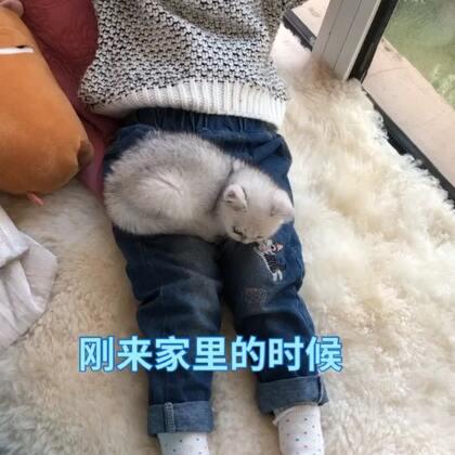 小哇一定是偷吃化肥了😂😂😂#宠物##精选#