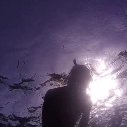我是一只会潜水的猫,下海找鱼吃咯!#运动##喵星人##自由潜水#
