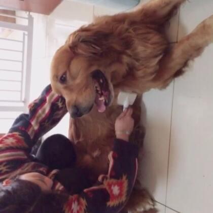 #宠物#梳毛