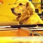 喜欢主人弹吉他的狗狗 #音乐##吉他##指弹吉他#@美拍小助手 @美拍音乐速递 @音乐频道官方账号