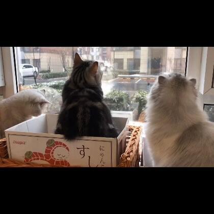久违的雪,猫咪好兴奋。