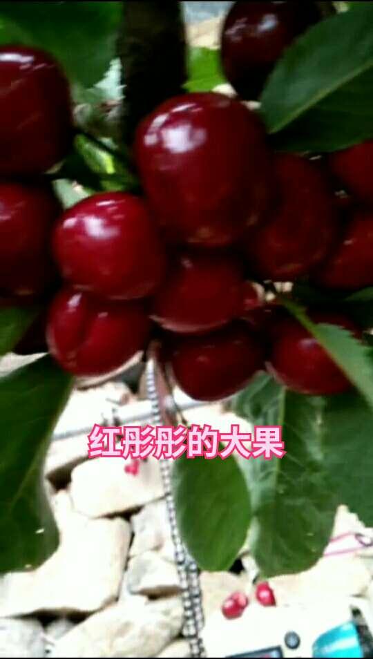 #family business##吃果果##宝宝吃水果#