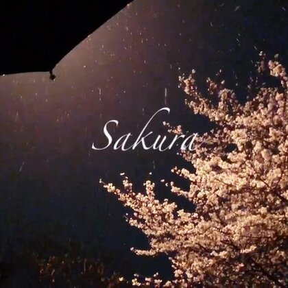 雨夜樱花🌸 #旅行##日志##声动告白#