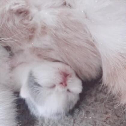 #加菲猫##加菲猫的幸福生活#哥哥妹妹总是一个在吃饭,一个在睡觉💤记录2018第一场雪❄️