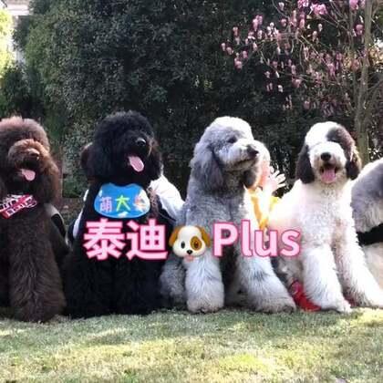 大宝贝们难得聚在一起的大合影😘#宠物##精选##汪星人#@美拍小助手 @宠物频道官方账号