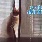 😂成精了,会聊天也就算了,竟然还会用手拨开窗帘…#宠物##这货成精了#