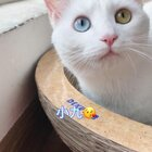 小土豆确实更喜欢猫😂可能是因为猫咪不会欺负他,跟他抢东西🌚🌚🌚 #宠物#(土豆麻自制宠物零食)http://shop.m.taobao.com/shop/shop_index.htm?spm=0.0.0.0&shop_id=117933639