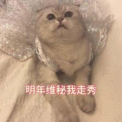 球球的婚纱👰