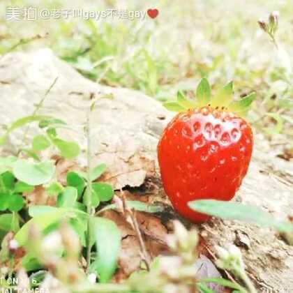 总感觉照片重复了,不过没所谓。#草莓#