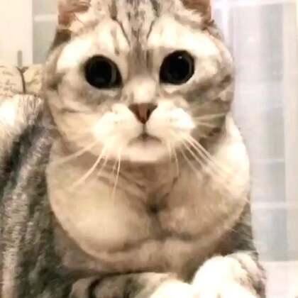 请欣赏我可爱的胸肌#宠物#