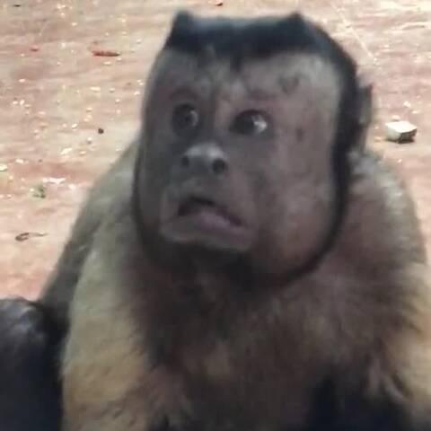【发现网美拍】这猴子有点方啊!😂😂😂#搞笑##...
