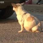 一只狗妈妈的故事,愿它能苦尽甘来,以后和孩子都好好的!❤️#正能量视频#