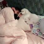 #熊宝宝超級CEO## 熊寶寶睡覺還要躺在爸爸的手上⋯⋯好可愛喔#~~