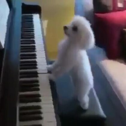 """据说这是""""李云迪""""家的狗狗😀😂#贵宾犬##宠物##狗狗#@美拍小助手"""