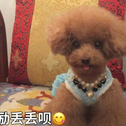 #宠物#-💖公主-甜心💖-公主:嘻嘻,有好吃哒🤤能不鸡冻吗🤪(哈哈,小丫头👸🏼,前后判若两🐶😅)#精选##家有萌宠#