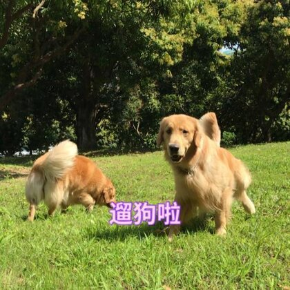#宠物##训犬##训练狗狗#