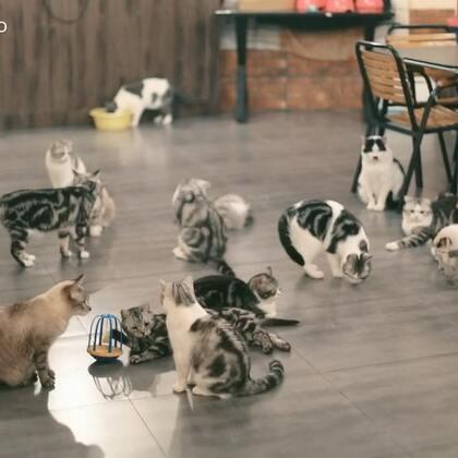 【Gu猫小乐园】哈哈哈哈~~太乖了