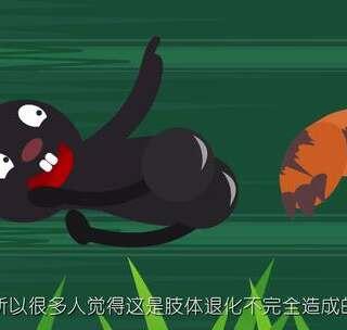 【霸王龙的小手手到底有什么用】你见过最会卖萌的动物是哪一种?#飞碟一分钟##搞笑##宠物#关注飞碟说,一言不合就卖萌!