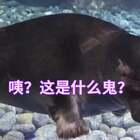 濱海邊疆區滴海豹寶寶看上了我滴包包,哈哈哈,真有眼光哈!#寵物##精選#