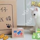 mimo:想让朕配合拍摄?不可能的!#宠物##我们养猫吧# ✨关注并转发评论,下周抽2位送出猫咪储蓄罐✨