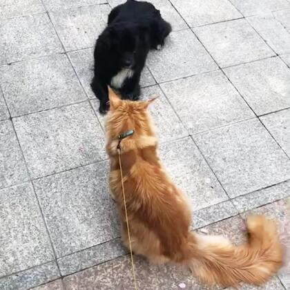 #宠物##家有萌宠#被只狗撩了……