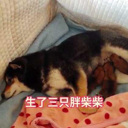 #小甜歌##宠物##i like 美拍#