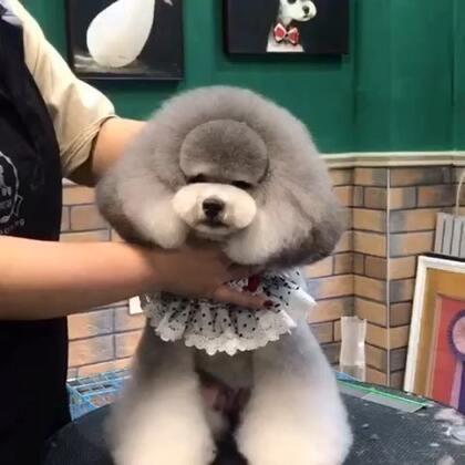 学员作品#宠物美容师的日常#