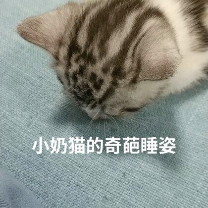 这高难度睡姿也是没谁了#宠物奇葩睡姿#