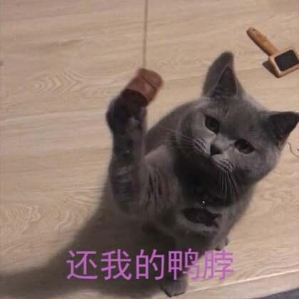 #宠物##鸭脖之歌##精选# 哈哈,鸭脖之歌😏@美拍小助手 @马达旋风-金淑娴