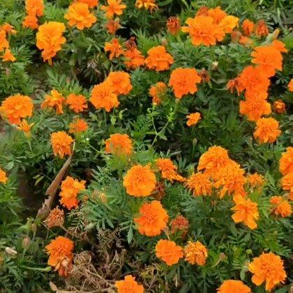 真是春暖花开的时候到处都是百花盛艳好漂亮啊#春暖花开#