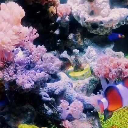 朋友打理了许久的小小生态水景,太美了吧!羡慕!#宠物##热带鱼##鱼#