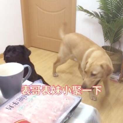 家庭小聚下~~涮个清汤锅、表哥表妹玩得很嗨~#宠物#