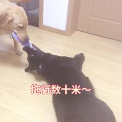 乌娜饰紫薇~~大表哥饰尔康、#宠物#