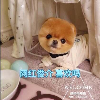 #美拍斗图大会#是真的真的小网红俊介啦 喜欢吗#宠物##我要上热门#