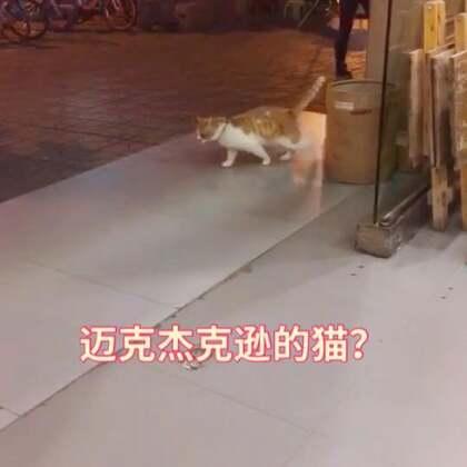 这是迈克杰克逊养的猫吧?腻害!#宠物#
