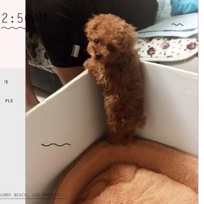 混组照片更新吧。 两只狗子还有它们的小狗宝😬#我要上热门@美拍小助手##狗狗日常照片#