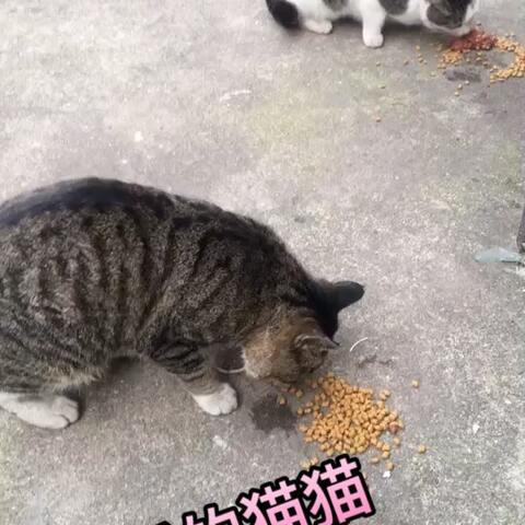 【kiki的妈妈❤️美拍】#宠物#虽然是流浪猫猫,一样一样...