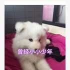 爱你爱你💕💕💕#宠物##宝宝##我要上热门@美拍小助手#