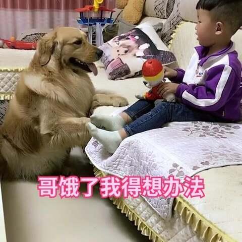 【神犬皮蛋美拍】#宠物##宝宝#😘😘😘