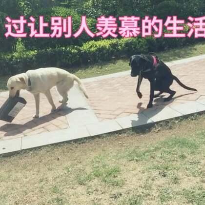 养狗逛街最舒服的状态 简单的文字 快乐的生活 让狗听话加我v❤️吧 #购物分享##宠物狗狗##洛阳##狗狗训练#