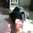 #宠物#就问你一句话,香么?哈哈哈