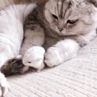 #宠物#鼠弟给猫哥修脚 要钱不要命啊……😅😂