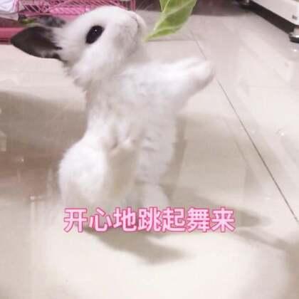 好逗!!!!!#小白兔白又白两只耳朵竖起来蹦蹦跳跳真可爱#