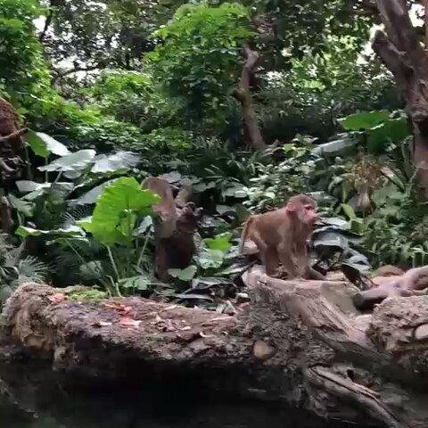 【发现网美拍】猴哥:你会开屏,我会后空翻!😂...