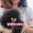 #宠物##佛系妈妈vs普通妈妈#哈哈哈 可爱死了