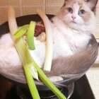 独家秘制~当归猫肉汤#宠物#