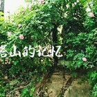 阔别九年再登荆门宝塔山,满城回忆四月蔓延……