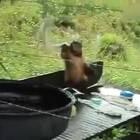 猴子:昨晚被老婆骂了,今天被罚洗衣服!😂😂😂#搞笑##动物#